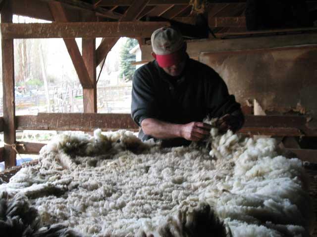 Производство шерсти