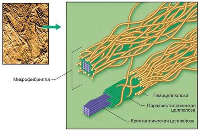 линейные цепи целлюлозы