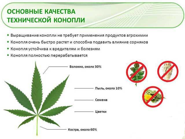 выращивание марихуаны в саду