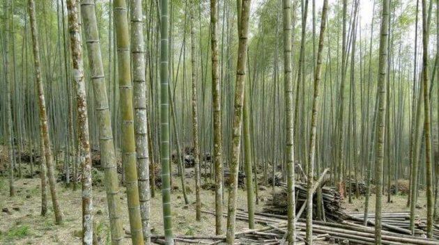 Бамбуковый наполнитель для одеял