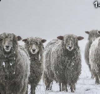 virgin-wool-blanket1